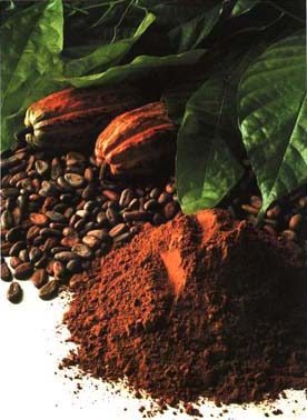 cacao_bean_to_powder_b98f